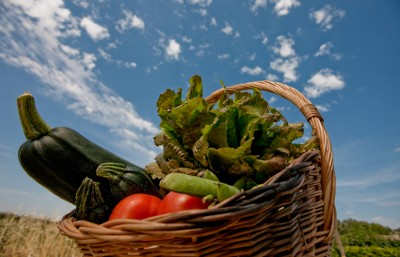 A basket of fresh vegetables from an eco garden