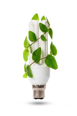 Eco friendly CFL light bulb with ivy plant growing up the side